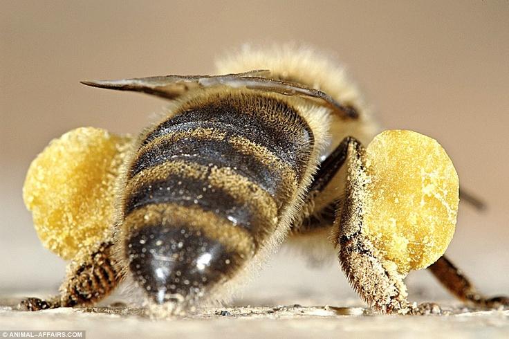 Pollen collection.jpg