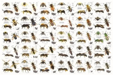 Types of bees image.jpg