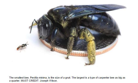 bee article image.JPG