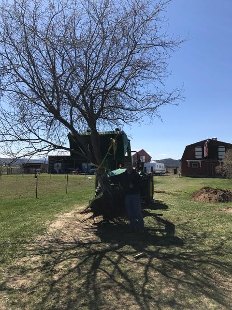 We relocated a tree on our property to make room for another project later this spring. We are crossing our fingers that this tree will settle itself in it's new honey bee garden location.