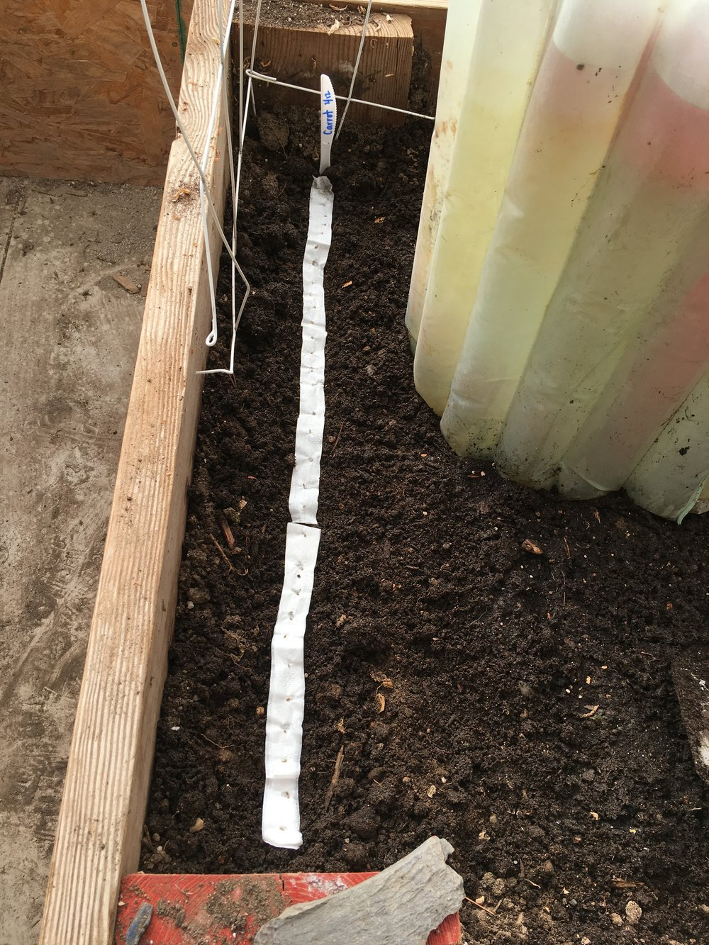 Seed tape and the use of Wall-O-Waters help give planting a jump start during the varied weather this time of year.