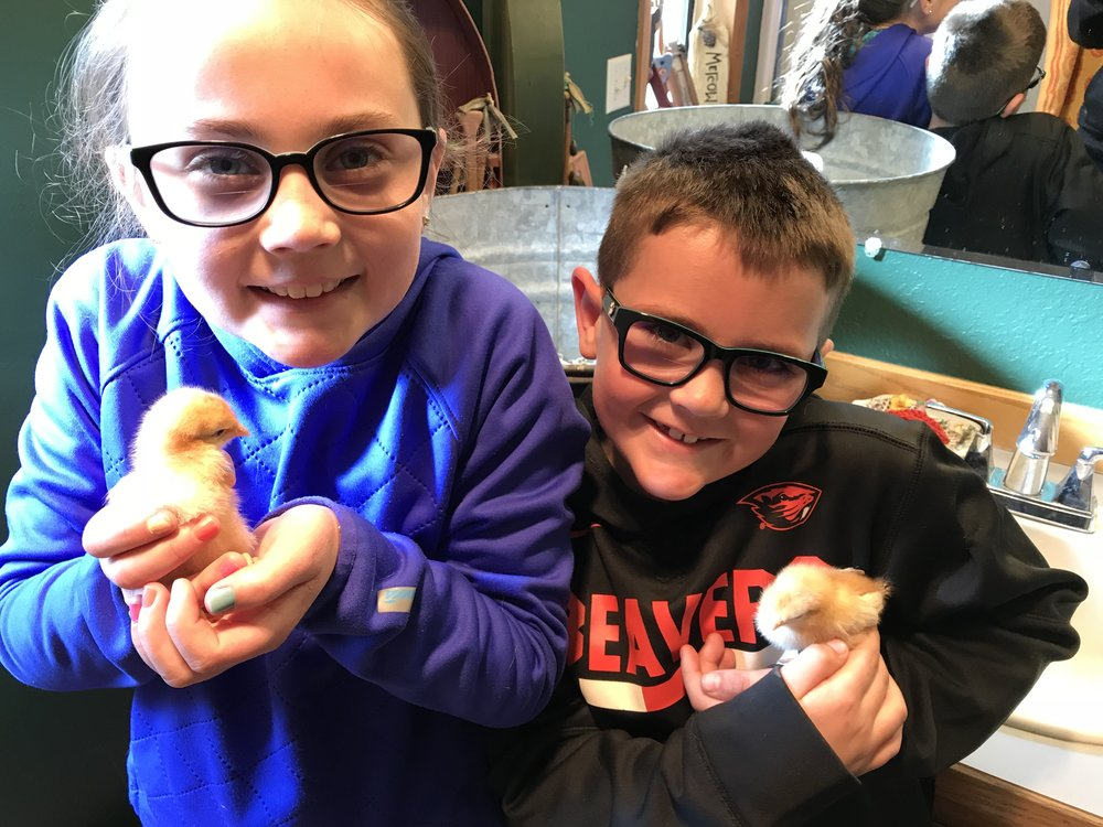 - It isn't all work around here. Thanks to the Easter Bunny, we are proud owners of four new baby chicks. These laying superstars will join the flock once they are big enough to defend themselves.