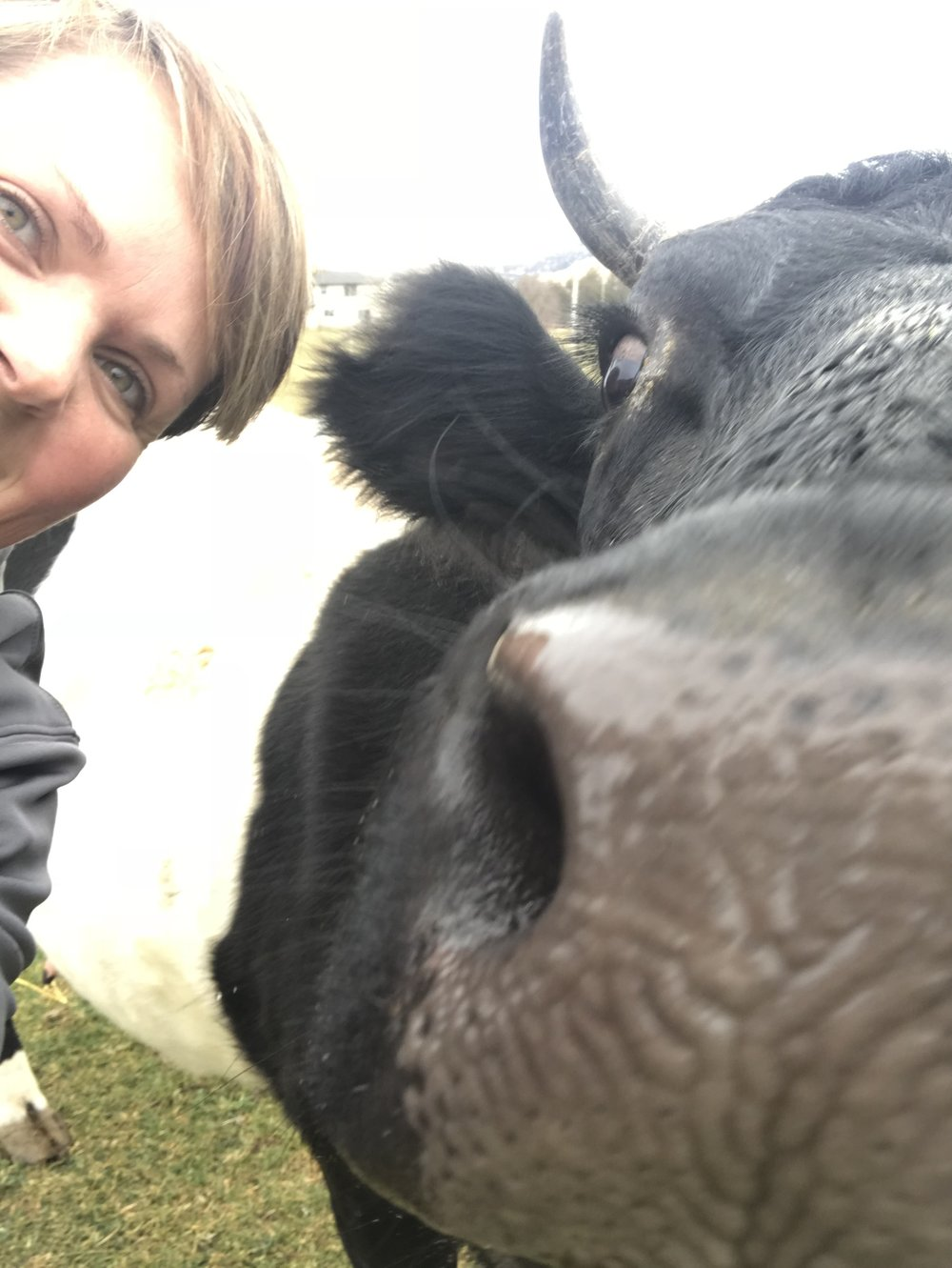 Our sweet mama cow Cookie stopped to pose for a selfie.