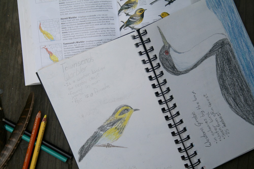 birdwatching homeschool journal