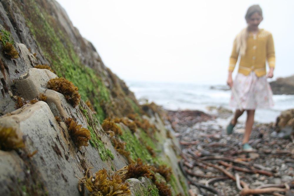 seaweedandgirlonbeach