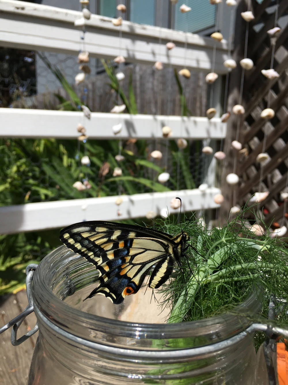 new yellow swallowtail butterfly