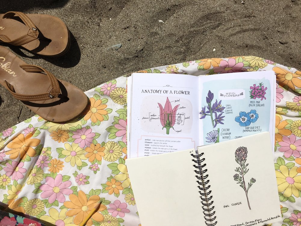 A Wildflower nature Study for Kids via bluecorduroy.com