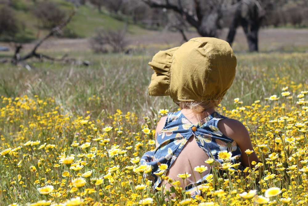 Sunbonnet in Wildflower field