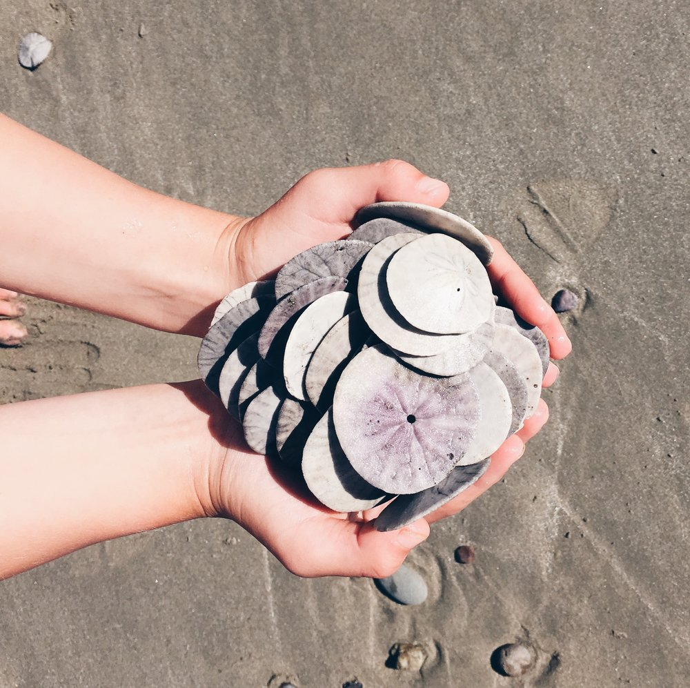 Handful of sand dollars, a beach treasure hunt via bluecorduroy.com