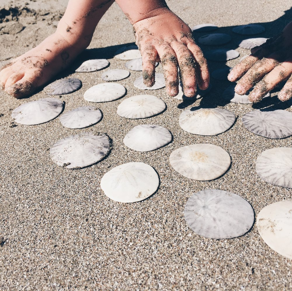 Baby fingers and sand dollars at the beach via BlueCorduroy.com