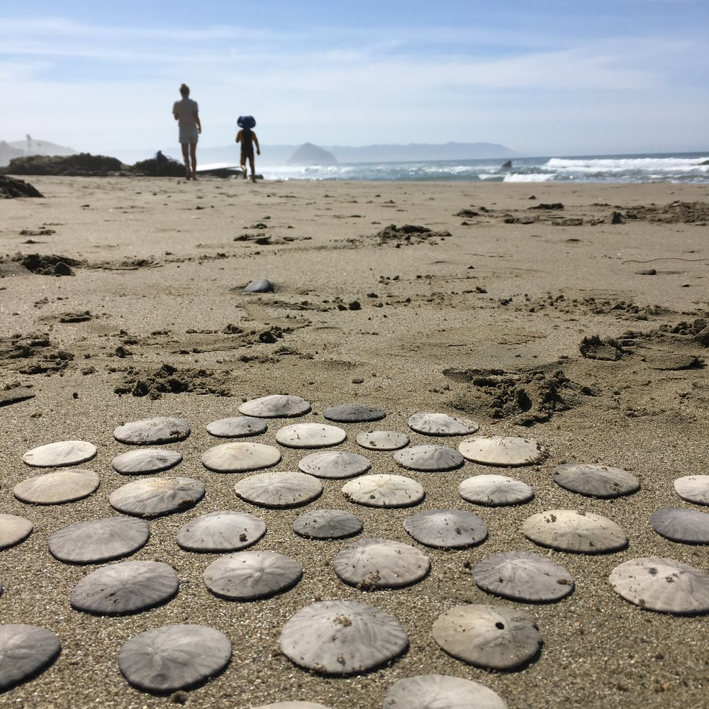 Beach walk and sand dollars for family adventure via bluecorduroy.com