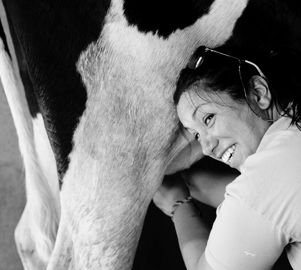 Milk A Cow!