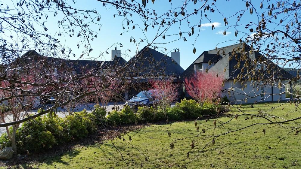 Landscape Design Services - Waikato