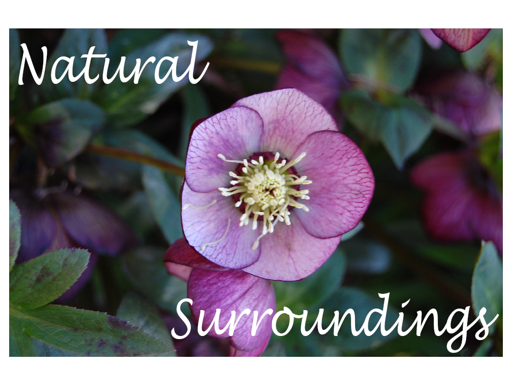 Natural Surroundings LLC