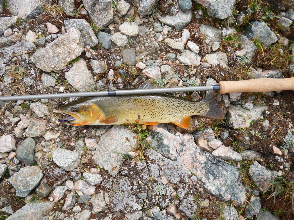 Snake River Cutthroat