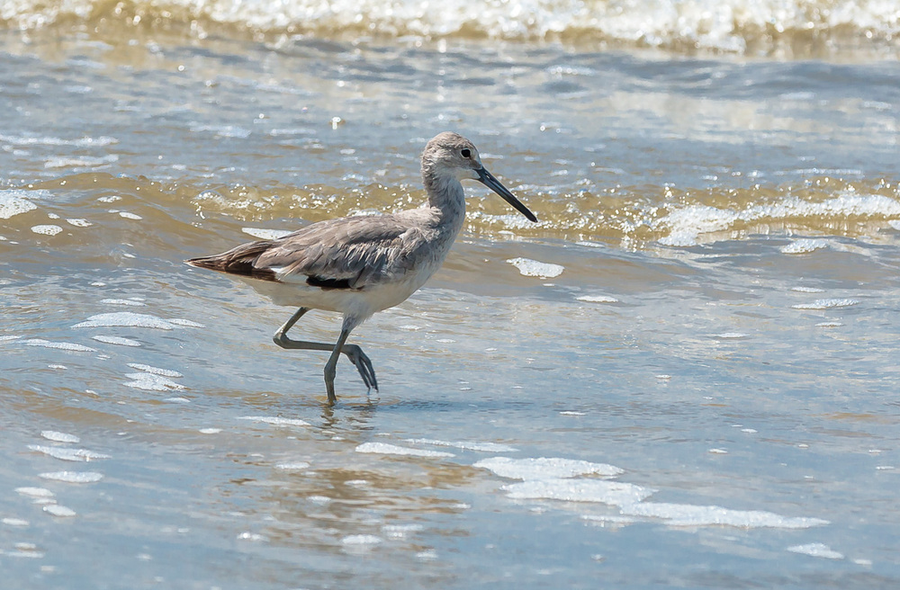 Birds at Indian Beach
