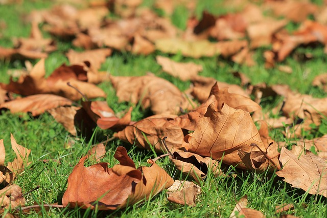 leaf removal service leaf removal services st louis st charles missouri leaf removal