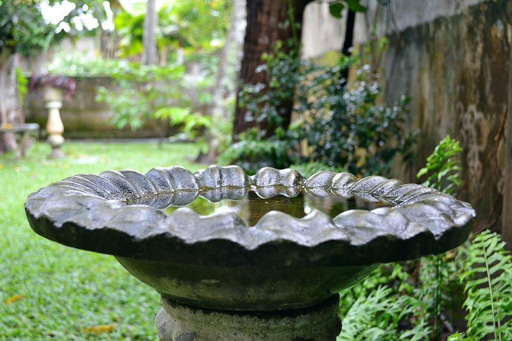 bird-bath-179928_1920.jpg
