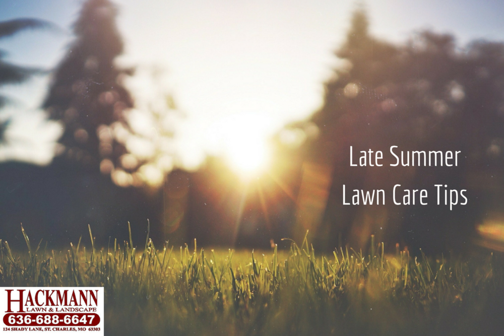 late summer lawn care