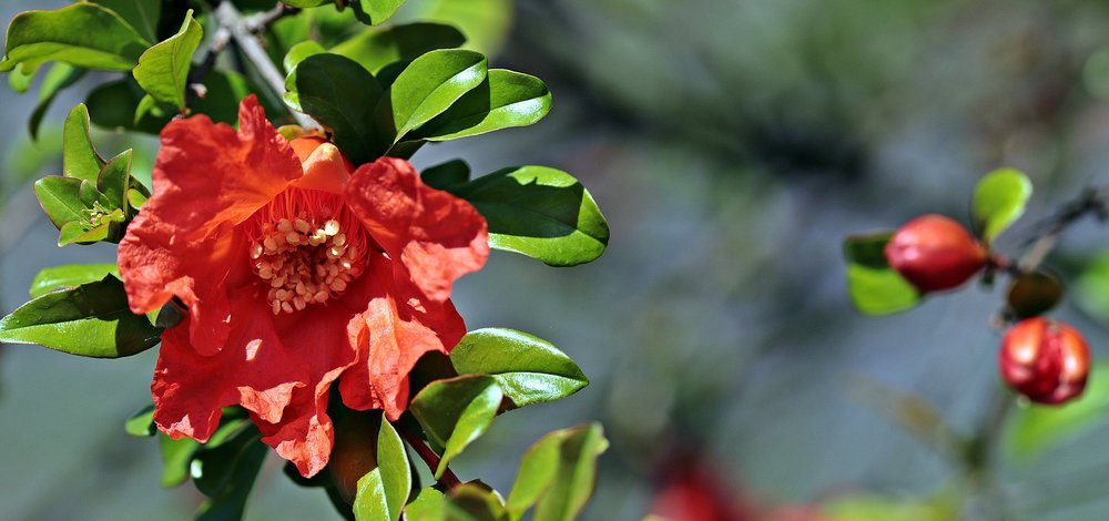 camellia-2399688_1920.jpg