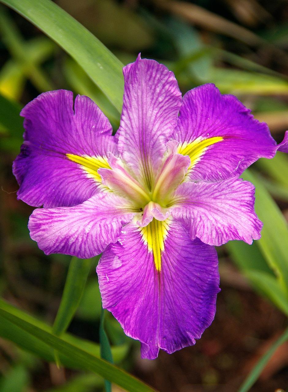 water-iris-426251_1280.jpg