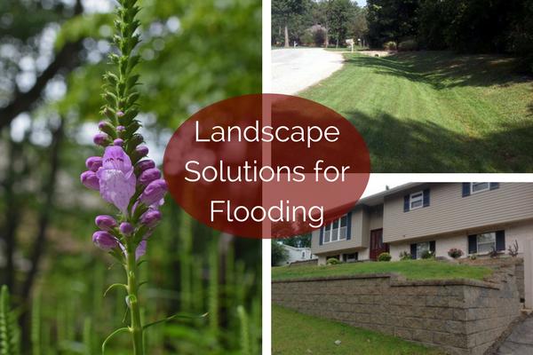 Landscape Solutions For Flooding Hackmann Lawn Landscape