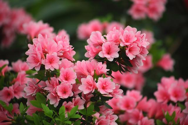 flowers-3294570_640.jpg