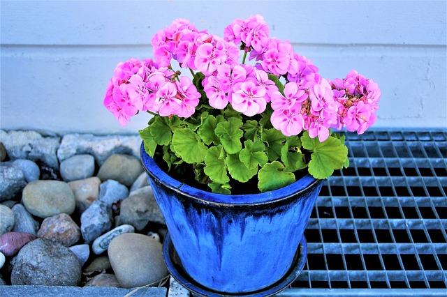 flower-pot-2844998_640.jpg