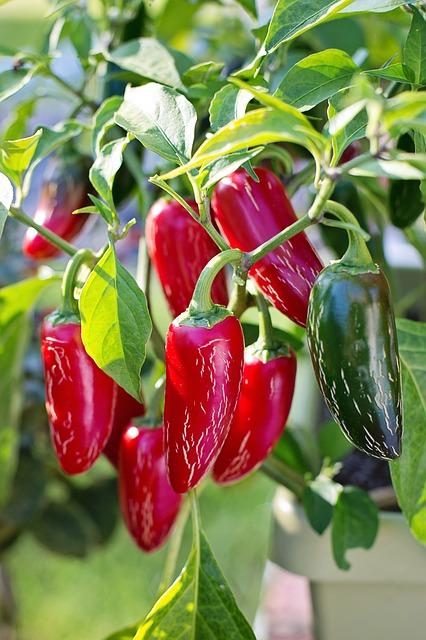 jalapeno-peppers-2708676_640.jpg