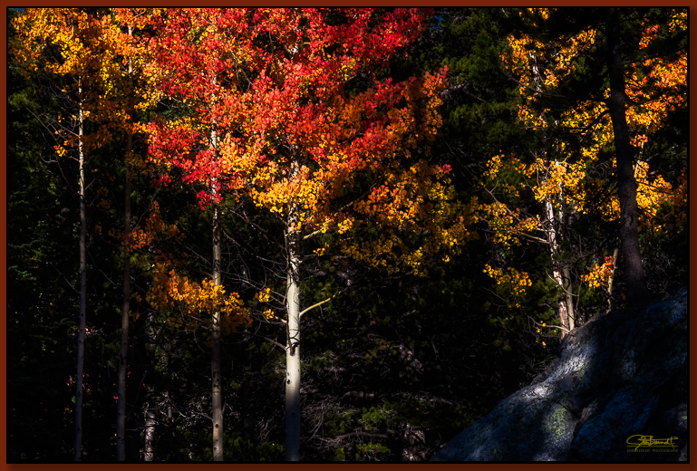 """""""Crimson and Gold"""" ©2016 Jon S. Berndt     An aspen has turned it's leaves to a rich crimson and gold. Found near Nymph Lake in Rocky Mountain National Park. To see a larger version and for purchase options,  click here ."""