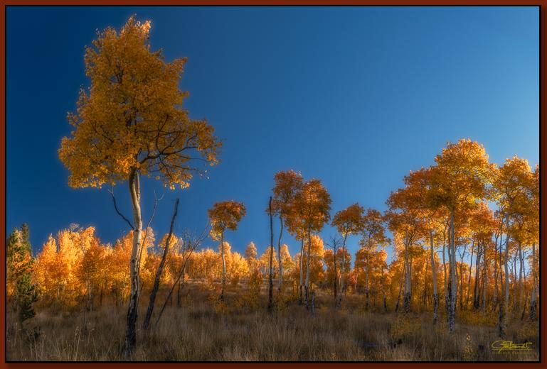 """""""High Golden Canopy"""" ©2016 Jon S. Berndt"""