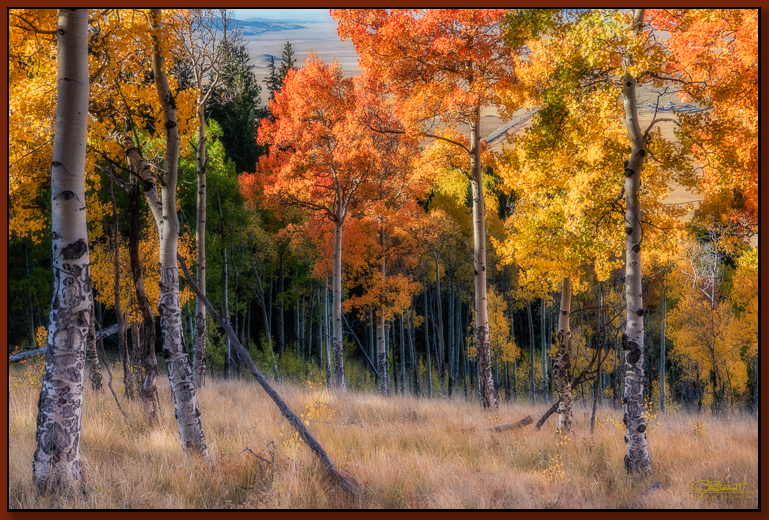 """""""Yellow and Gold Hillside"""" ©2016 Jon S. Berndt   To see a larger version and for purchase options ,  click here ."""