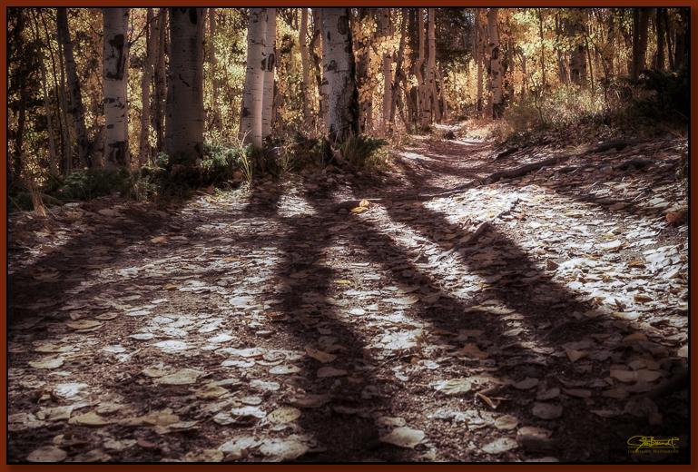 """Leaf Blanket Trail"" ©2016 Jon S. Berndt"