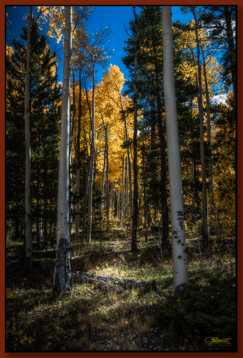 """""""The Portal"""" ©2016 Jon S. Berndt    Two aspens stand tall, seeming to frame the path to a beautifully lit aspen.  To see a larger version and for purchase options ,  click here ."""