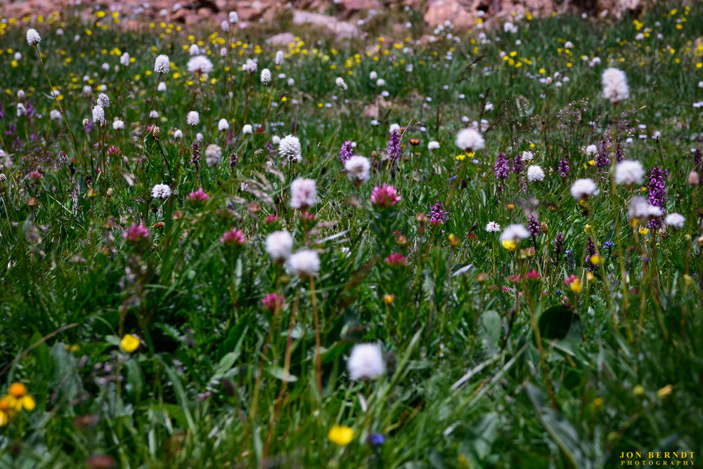 There was a huge variety of wildflowers along the trail but especially at the top. It was hard to know where to point the camera sometimes.(C) 2017 Jon Berndt Photography