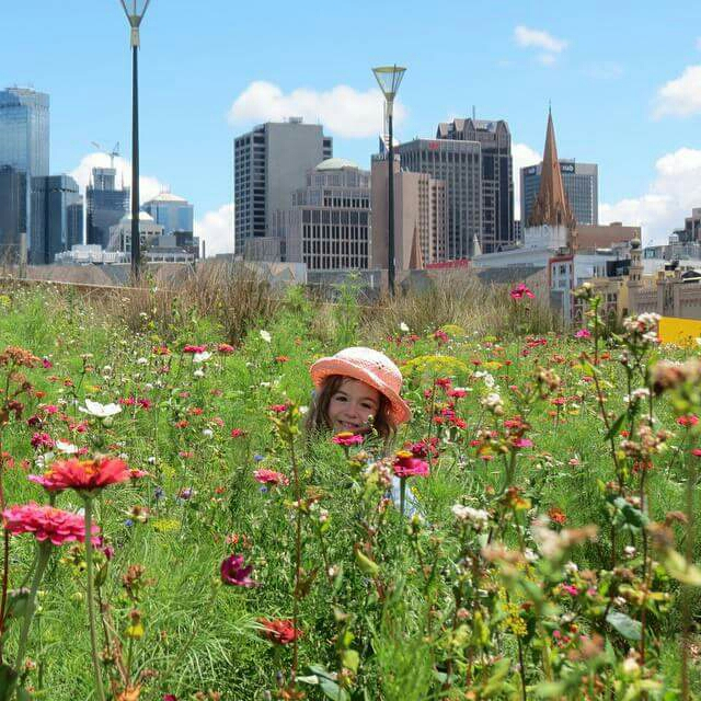 Birrarung Marr. This shot was taken in the wild flowers that run along the Flinders Street side but there is plenty more to discover. Art Play runs free workshops for kids, the playground is fantastic and there are great views of the river and the city. There are always events here on the weekends that can be fun too.