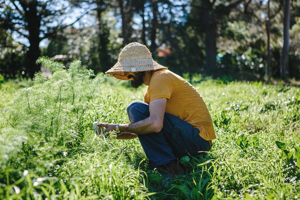 why-urban-farming-1