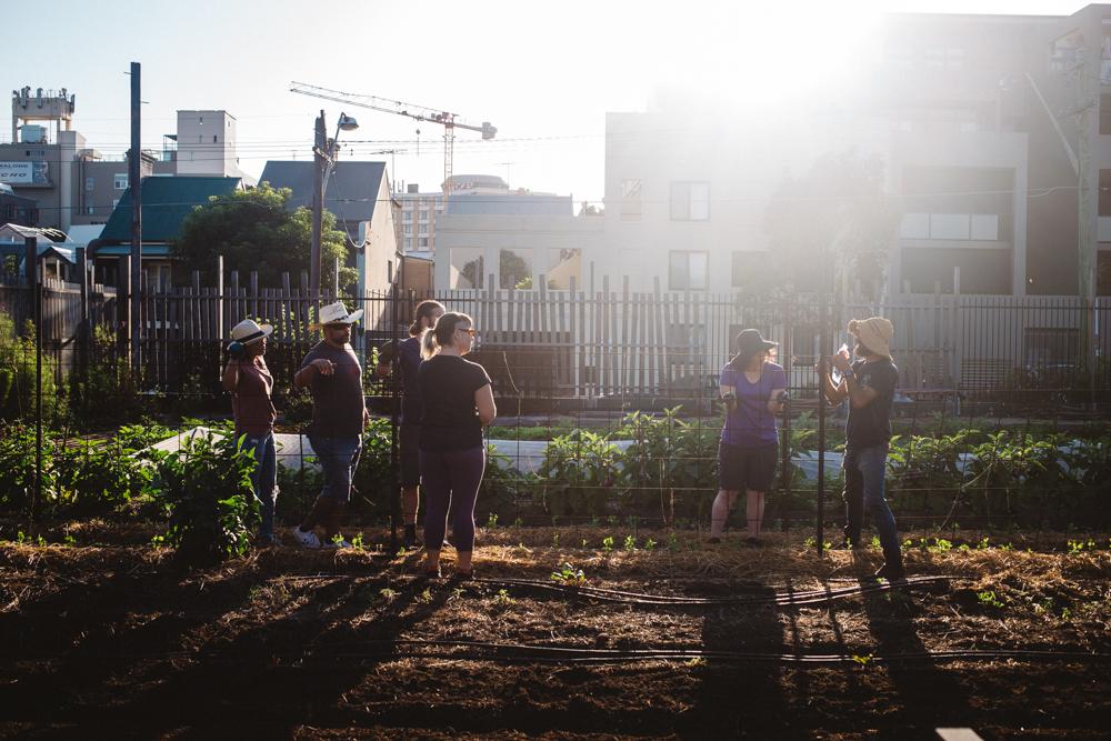 Pocket City Farm_by_Luisa Brimble_134.jpg
