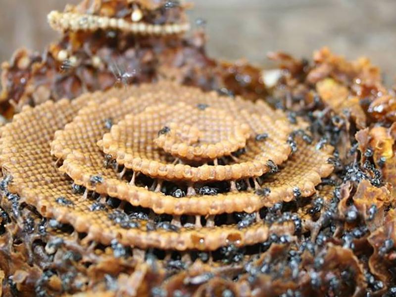 Native Beekeeping.jpg