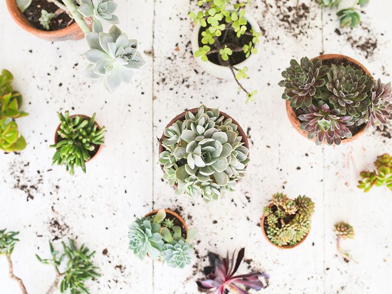 Succulent Terrariums.jpg