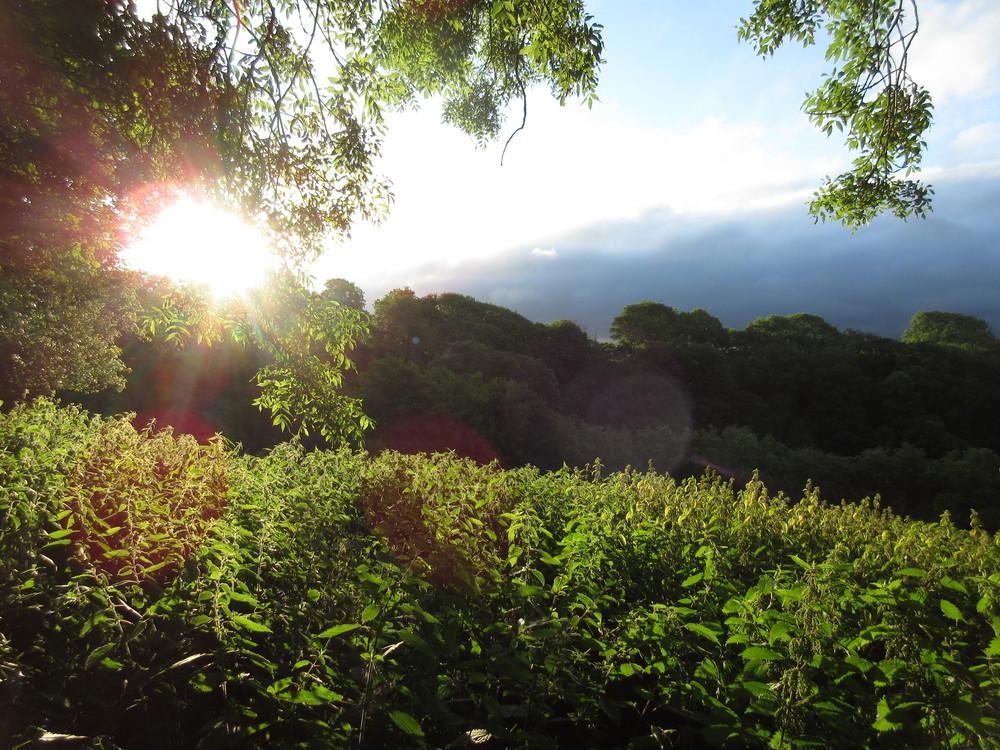 Summer dawn.JPG