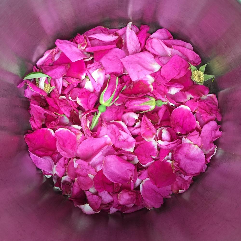 ruusun_teralehtia