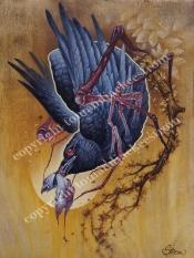spider crow