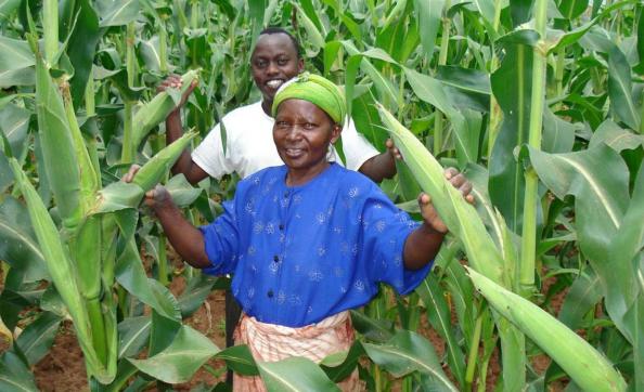 Farmers in Makueni helped by FIPS-Africa
