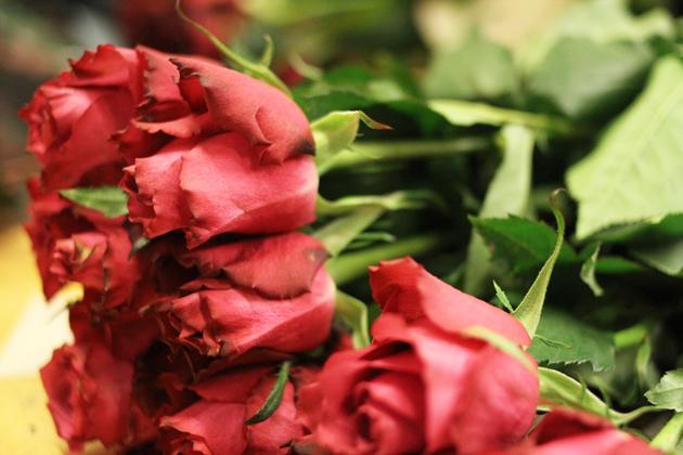 Roses-630.jpg