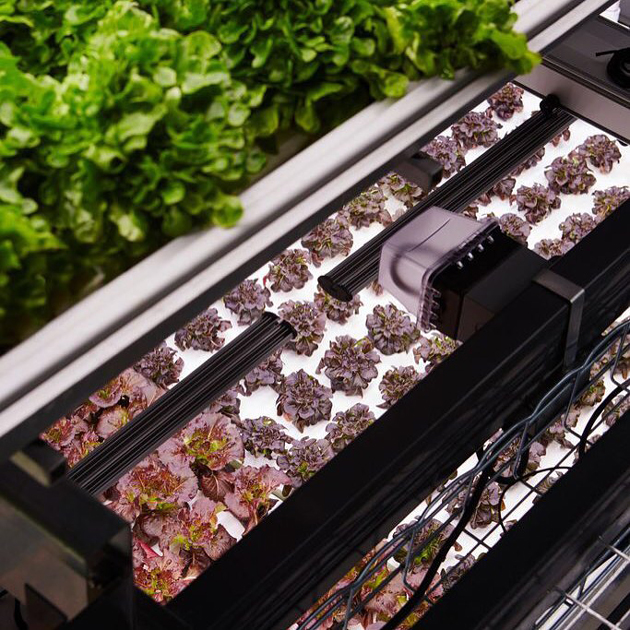 Bowery use LED lights to grow produce 365 days a year. Photo: Bowery.