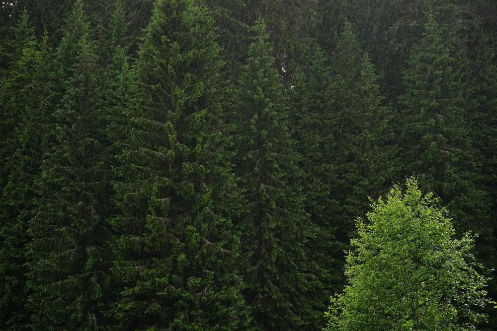 cover_forest_education_mojo.JPG