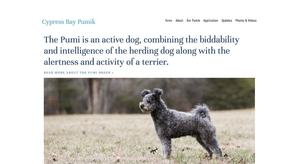 Pumi Dog Breeder