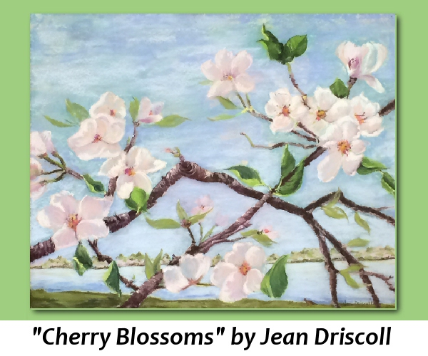 Cherry-Blossoms-by-Jean-Driscoll2.jpg