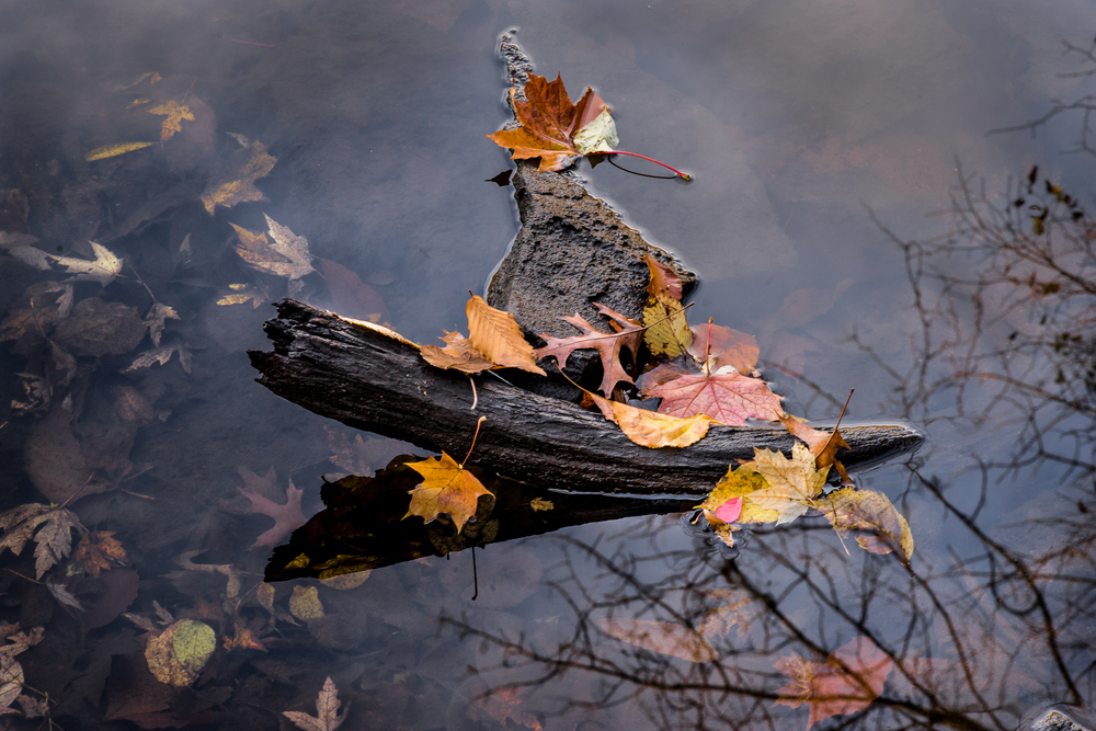 Drowning Leaves, Bare Branches.jpg